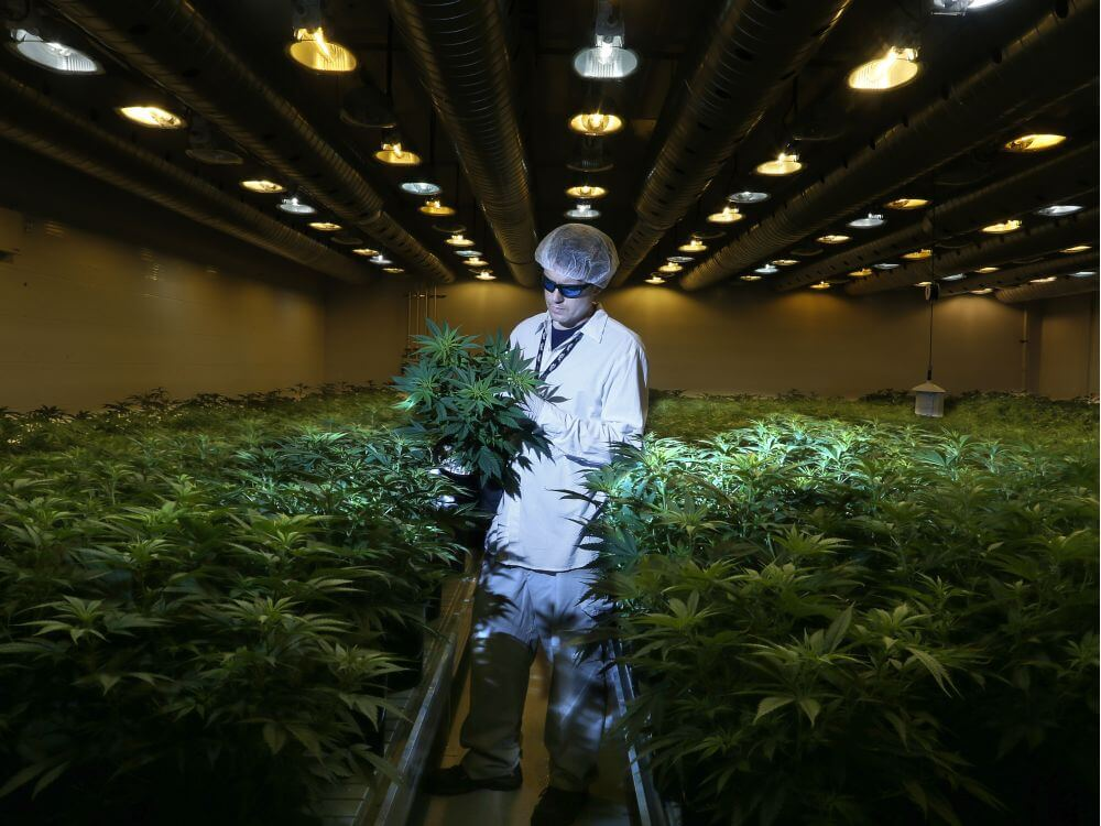 How To Grow Your Cannabis Manufacturing Business